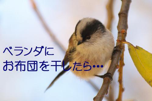050_20121206193324.jpg