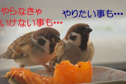 050_20121212214428.jpg