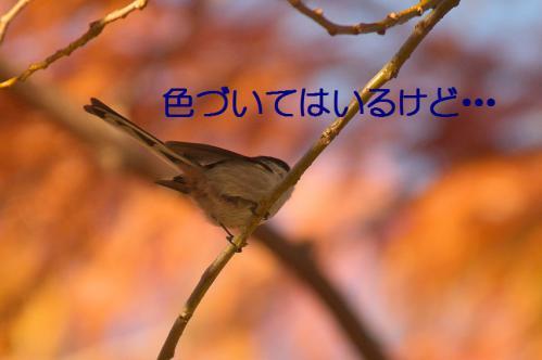 050_20121213213942.jpg