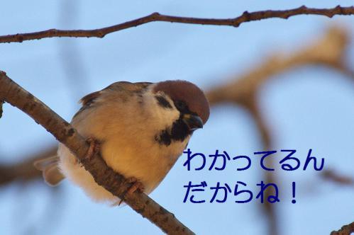 050_20121214214657.jpg