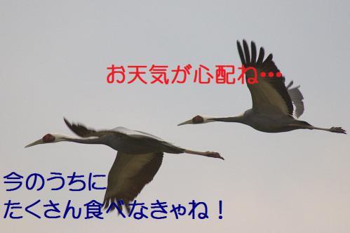 050_20121216202650.jpg