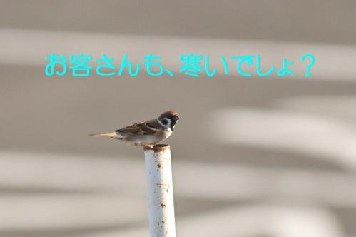 050_20121217024306.jpg