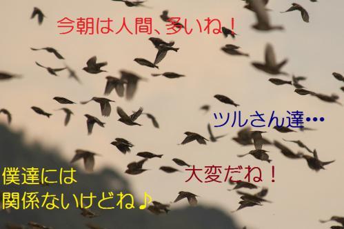 050_20121220193343.jpg