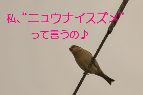 050_20121221214933.jpg