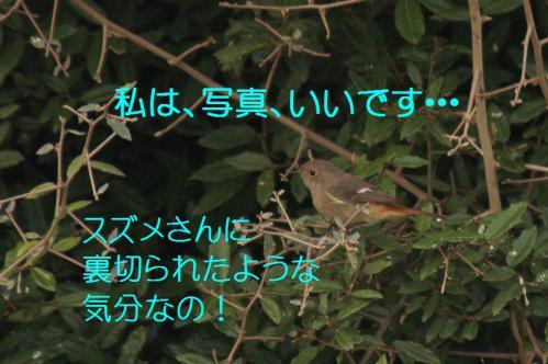 050_20121222193840.jpg