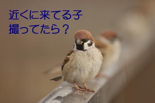 050_20121227213457.jpg