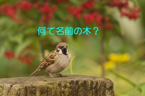 050_20121228215053.jpg