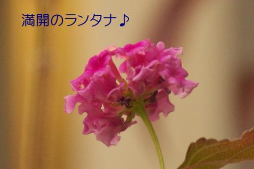 050_20121229231637.jpg