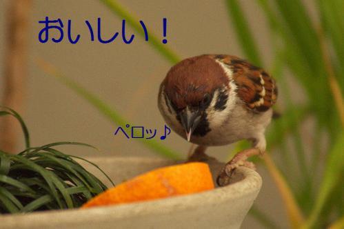 050_20121230221122.jpg