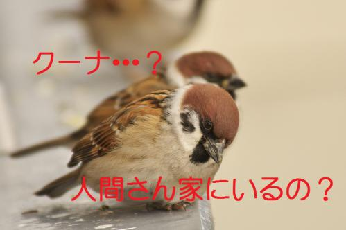 055_20121203223943.jpg