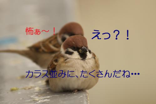 055_20121215200119.jpg