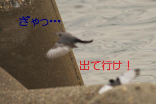 057_20121205221347.jpg