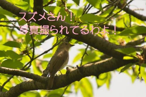 060_20120430195423.jpg