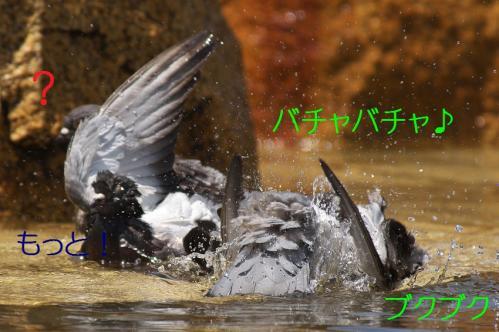 060_20120501203935.jpg