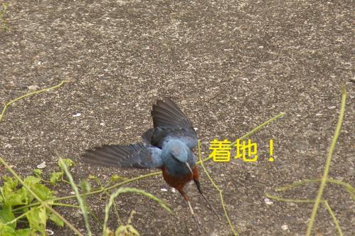 060_20120611231600.jpg