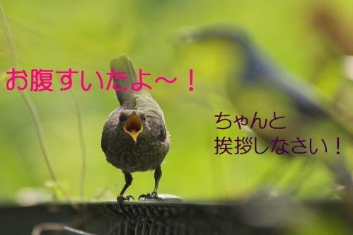 060_20120612214924.jpg