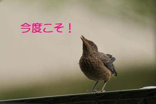 060_20120613233457.jpg
