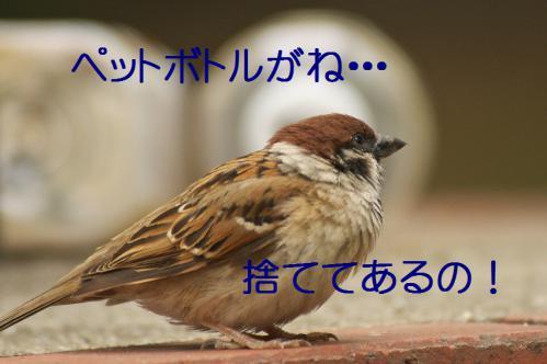 060_20120630222335.jpg