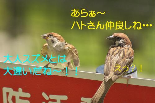 060_20120731204343.jpg
