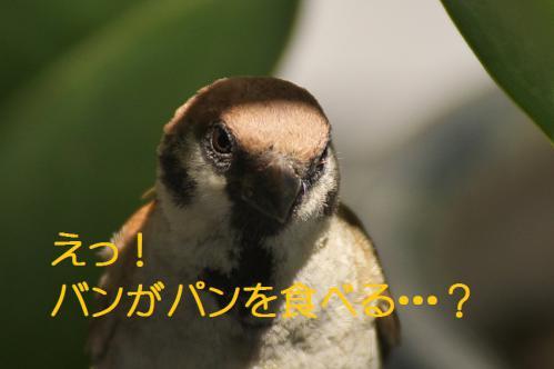 060_20120821210914.jpg