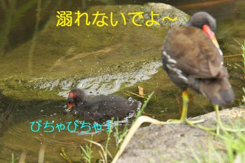 060_20120822221730.jpg