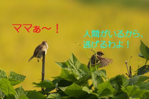 060_20120904224402.jpg