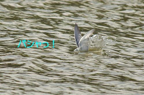 060_20121009191349.jpg