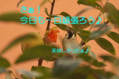 060_20121030223059.jpg