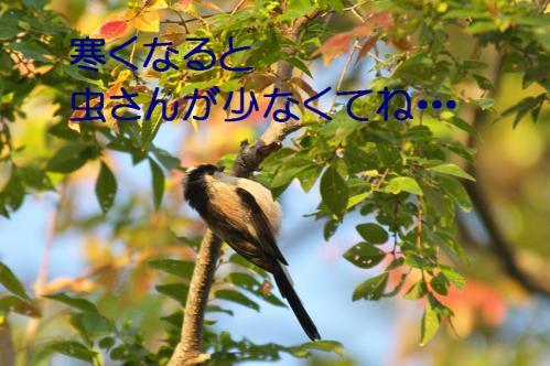060_20121031214754.jpg