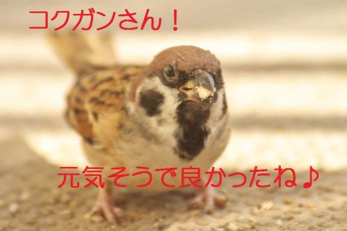 060_20121102220016.jpg