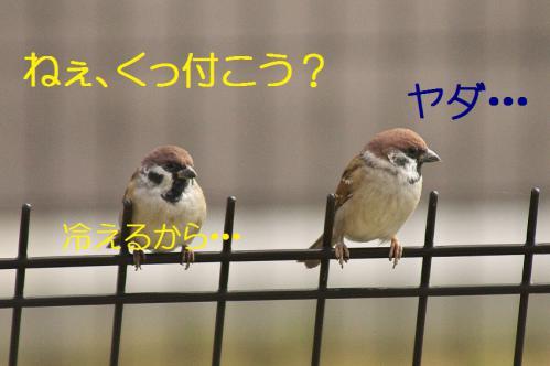 060_20121103224648.jpg