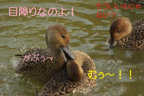 060_20121112215355.jpg