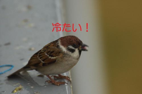 060_20121117212458.jpg