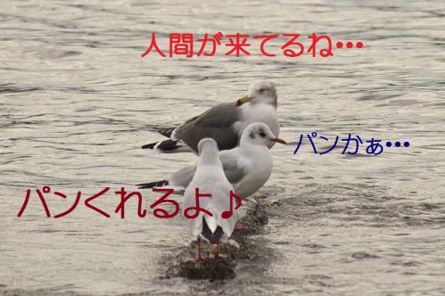 060_20121124215353.jpg