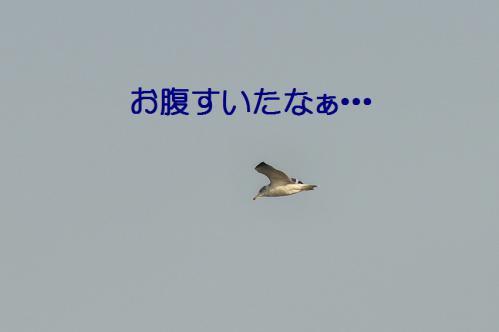 060_20121125192218.jpg