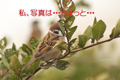 060_20121126223049.jpg