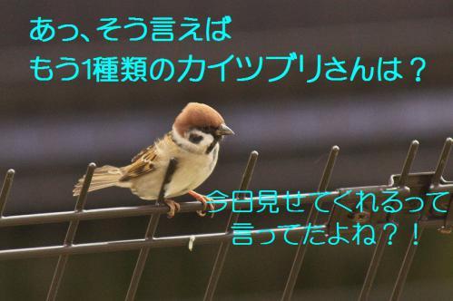 060_20121201214800.jpg