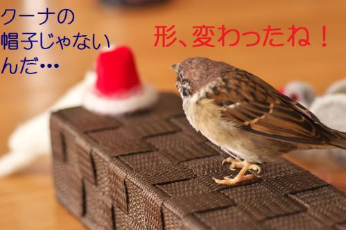 060_20121203223949.jpg