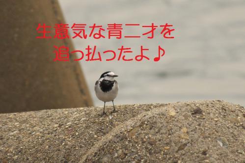 060_20121205221354.jpg