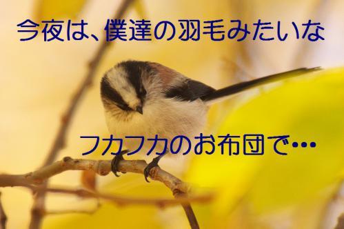 060_20121206193409.jpg