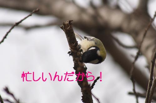 060_20121206222401.jpg