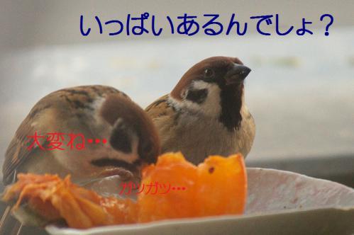 060_20121212214517.jpg
