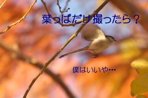 060_20121213213946.jpg