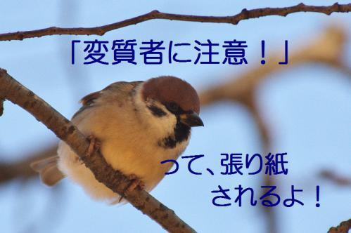 060_20121214214817.jpg