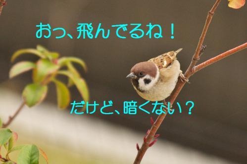 060_20121216202653.jpg