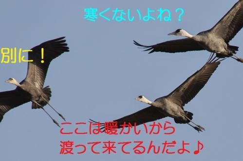 060_20121217024552.jpg