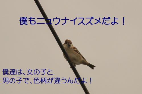 060_20121221214935.jpg