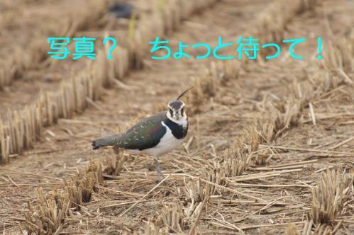 060_20121222194455.jpg