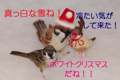 060_20121223183946.jpg