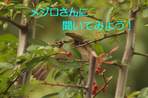 060_20121225223338.jpg